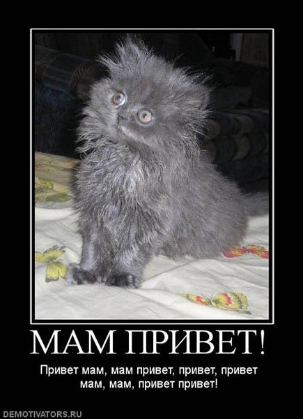 Демотиваторы про кошек и котов
