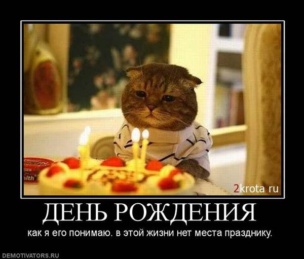 Демотиваторы смешные про котов