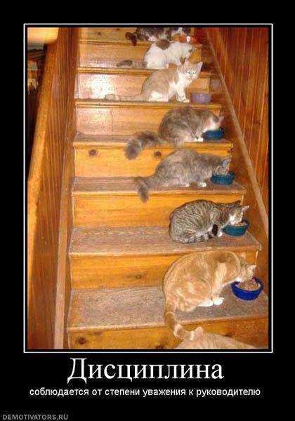смешные кошки демотиваторы
