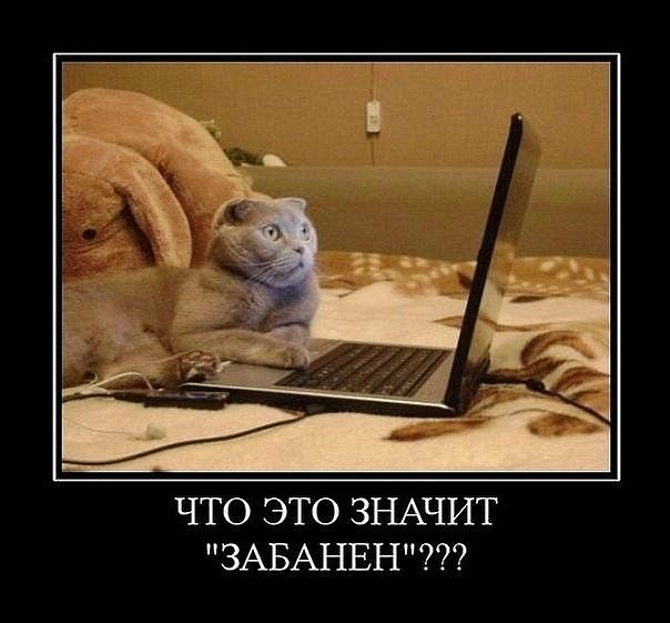 http://catspedia.narod.ru/p7/demotivator/photo2demotiv/002.jpg