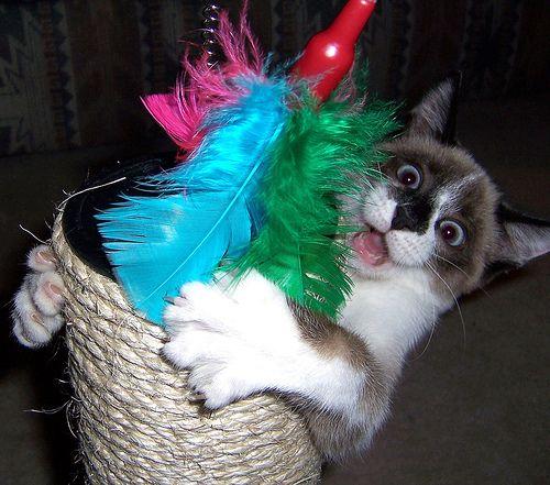 Фотогалерея юмора кошки и коты 2